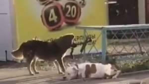 Bezpański pies widzi innego psa przywiązanego smyczą do ogrodzenia. Wtedy postan
