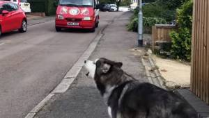 Ten pies codziennie czeka na samochód z lodami, zobacz jego reakcję gdy w końcu
