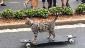 Zobacz kota, który umie jeździć na deskorolce lepiej niż nie jeden człowiek!
