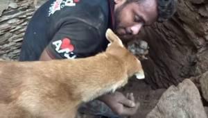 Suczka pomaga ratownikom odkopać szczeniaki, które zostały przysypane przez gruz