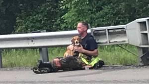 Po wypadku przerażony pies nie chce opuścić rannego właściciela, wtedy strażak r