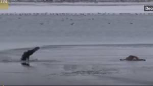 Mężczyzna widzi szczeniaka dryfującego na lodzie, wtedy dokonuje bardzo heroiczn