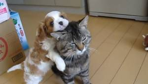 Bardzo urocze: mały szczeniak chce się bawić, a ten kot wcale nie jest tym zachw