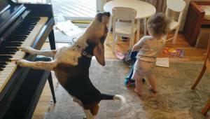 To co ta dziewczynka wyprawia ze swoim psem rozbawi każdego miłośnika dobrej zab