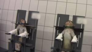 Szokujące nagranie pokazuje jak zwierzęta laboratoryjne są traktowane podczas ba