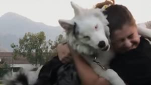 Ten pies jest niewidomy i głuchy... Ale właścicielka wciąż potrafi się z nim kom