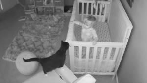 Urocza wieczorna rozmowa małego chłopczyka i jego kota to coś co poprawi humor k