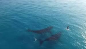 Zobaczcie, co się dzieje, gdy dwa wieloryby widzą na morzu samotnego człowieka..