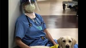 Poruszające zdjęcie, które pokazuje, jak pies pociesza wykończoną ciężkim dyżure