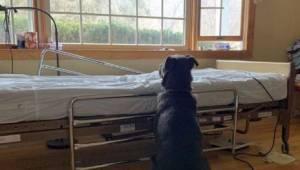 Poruszające zdjęcie ukazujące prawdziwą miłość. Pies wciąż czeka przy łóżku swoj