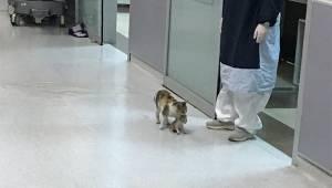 Kotka przyprowadziła swoje chore dziecko do szpitala w nadziei, że lekarze jej p