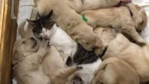 Małe szczeniaki mają najbardziej uroczą opiekunkę na świecie! Coś niesamowitego!