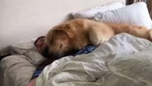 Sposób w jaki pies budzi swojego pana sprawi, że każdy oglądający będzie miał uś