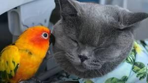 Niezwykła relacja kota i papugi.. Gdybym nie zobaczyła tego filmiku nie uwierzył