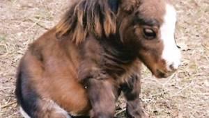 Każde dziecko widząc tego konia natychmiast go zapragnie!