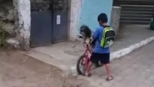 Chłopiec wybrał się do sklepu razem ze swoim psem, oglądaj uważnie, bo to co zar