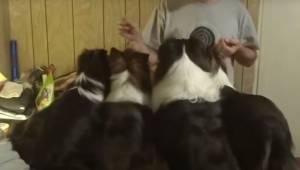 Właściciel daje każdemu psu przysmak, patrz uważnie na psa z lewej. GENIALNE!