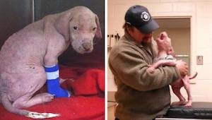 Szczeniak nie może uwierzyć, że mężczyzna który go uratował wrócił go adoptować!