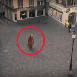 Mężczyzna przebrał się za misia i stanął na środku rynku. Chwilę potem? Szok!